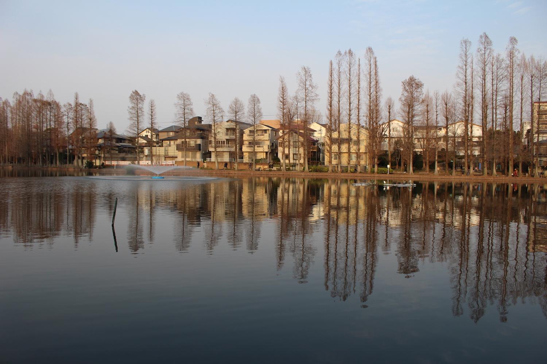 別所沼公園を散歩