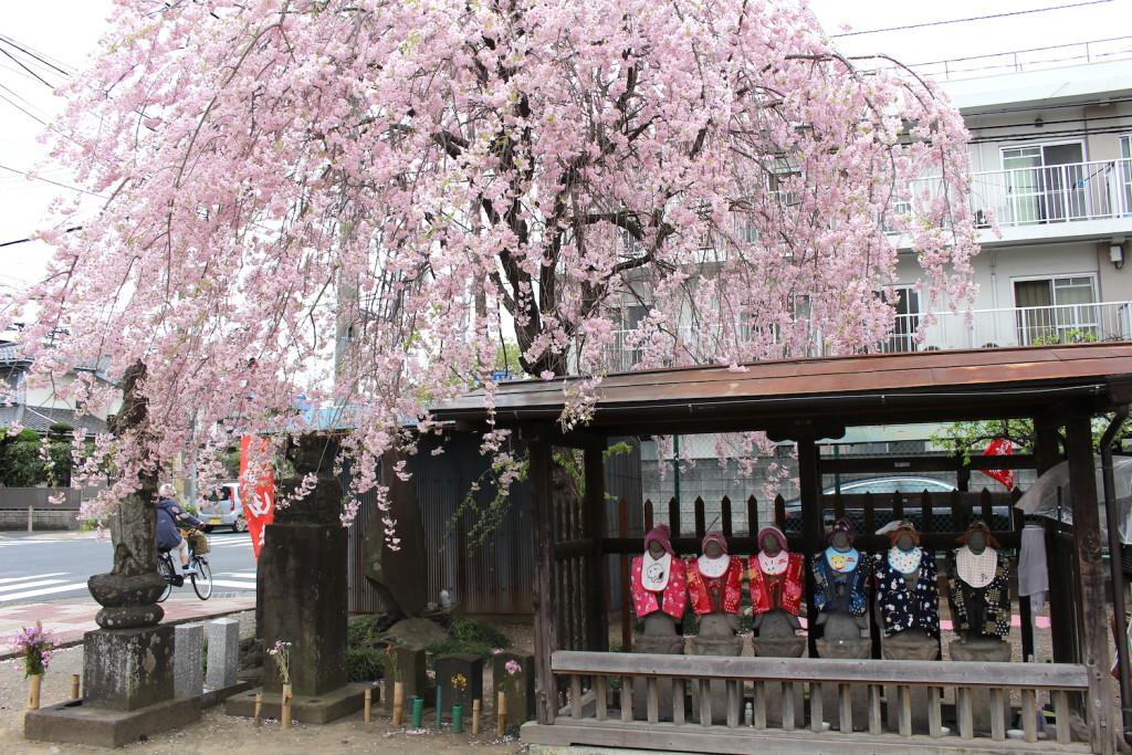 しだれ桜と六地蔵