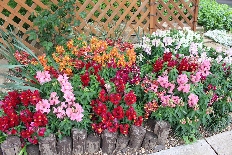 プラウドタワー武蔵浦和ガーデンの花壇がとっても綺麗!