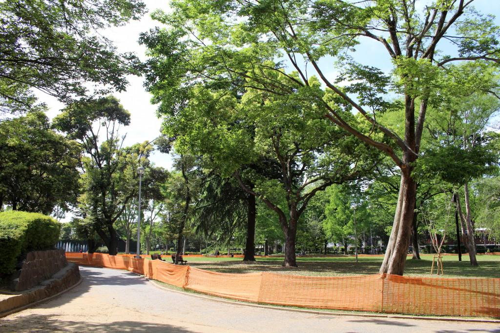北浦和公園の木々