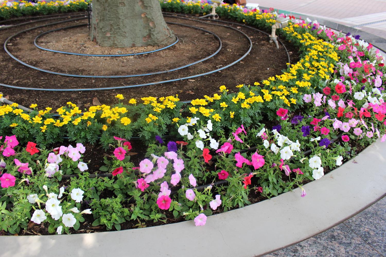 ラムザ広場の花壇