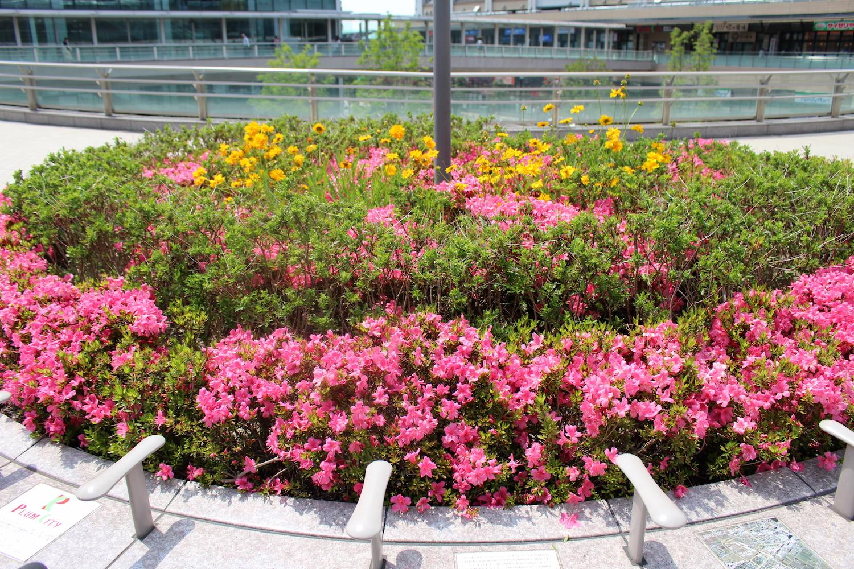 サウスピア前の花壇のお花
