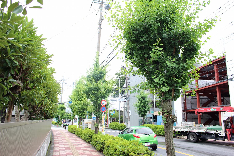 夏の田島通り