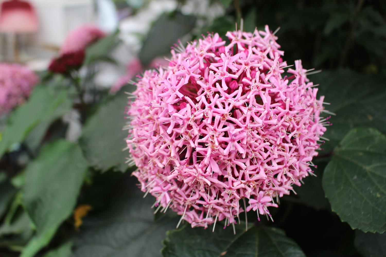 面白い形の花