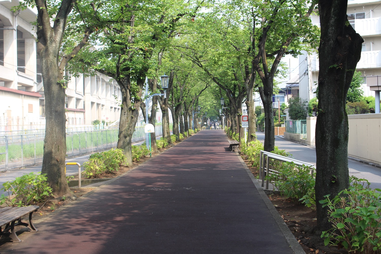 早朝の花と緑の散歩道