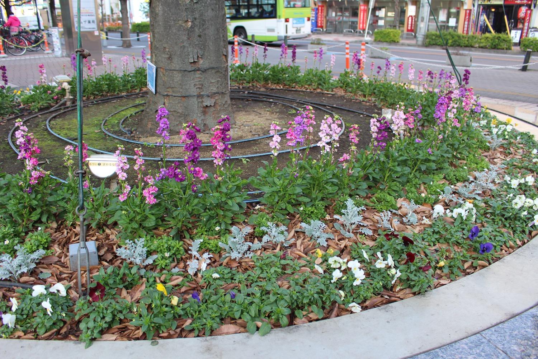 冬のラムザ花壇