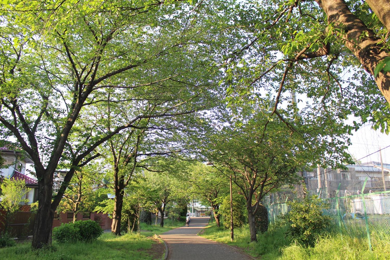 新緑が綺麗な白幡沼