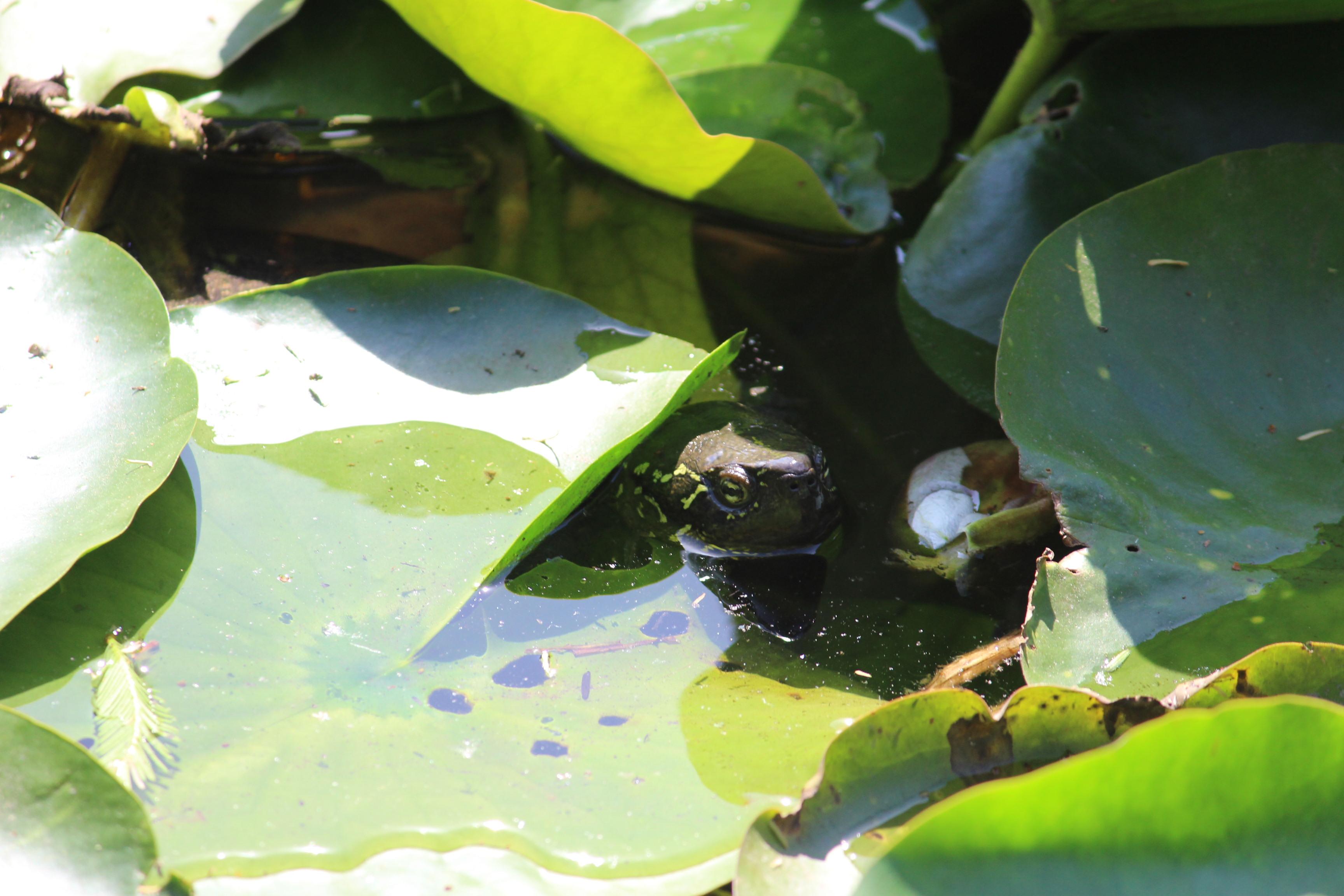 池の中からこんにちは!