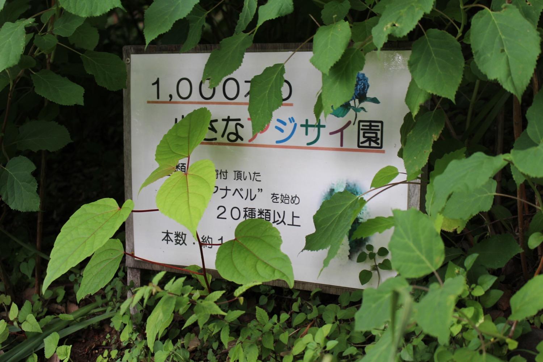 1000本の小さな紫陽花園