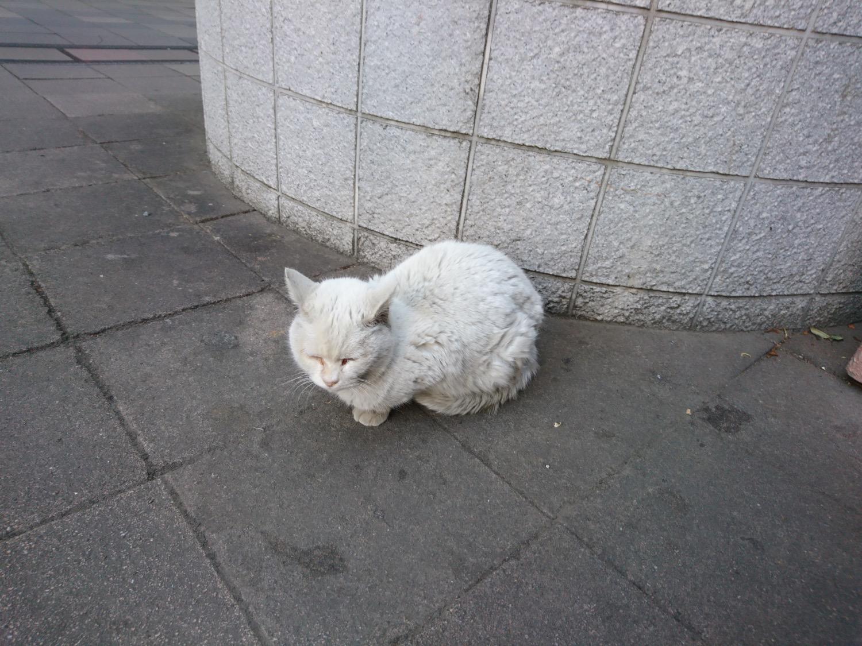 武蔵浦和駅の猫ちゃん