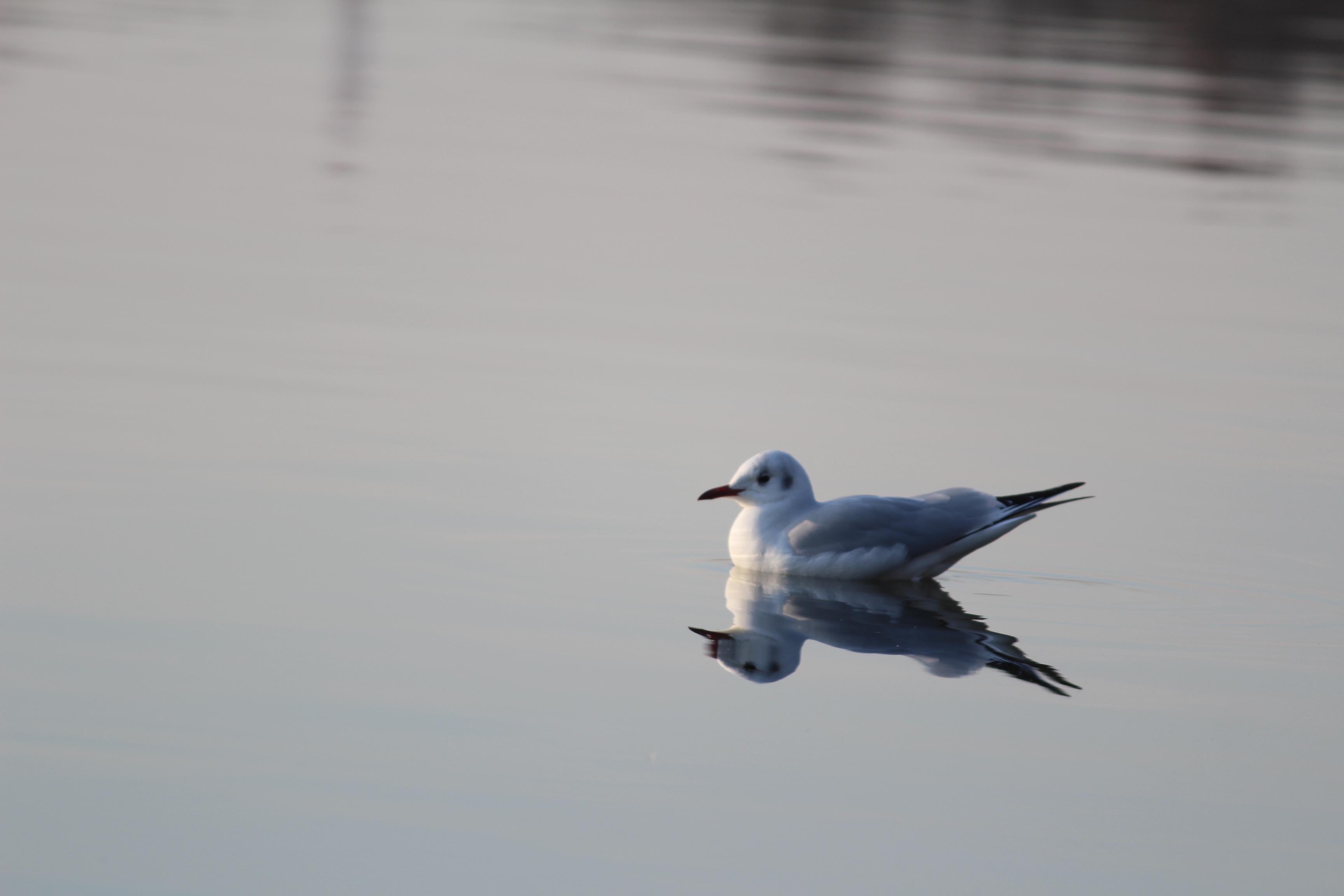 彩湖と水鳥