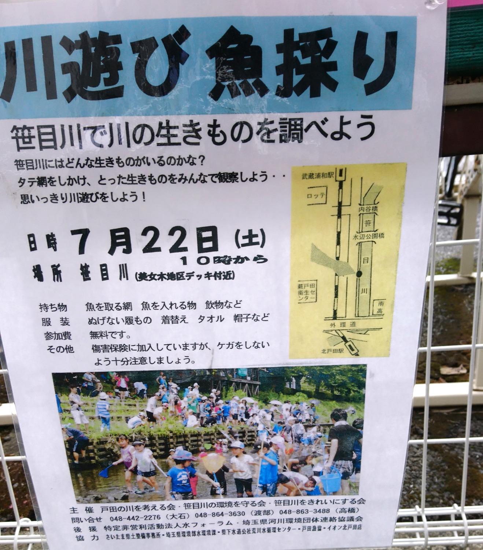 川遊び魚採り(笹目川)