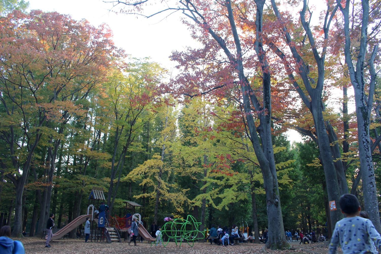 別所沼公園の紅葉はもう少しかな